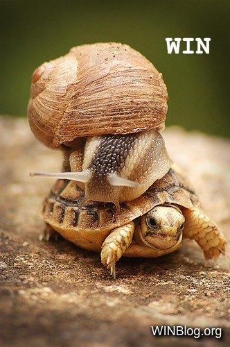 transportation-win.jpg