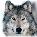 Wolfoflies